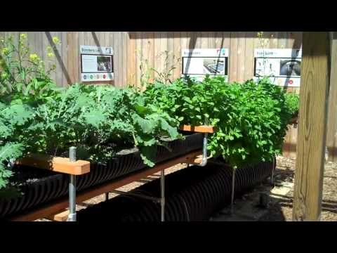 Hydroponics without the Chemical Fertilizers. Aquaponics without the Fish