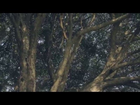 Короткометражный фильм 'Сын'