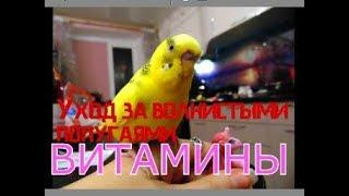 УХОД ЗА ВОЛНИСТЫМИ ПОПУГАЯМИ! Витамины для волнистого попугая. Зачем попугаю витамины!? Часть 4