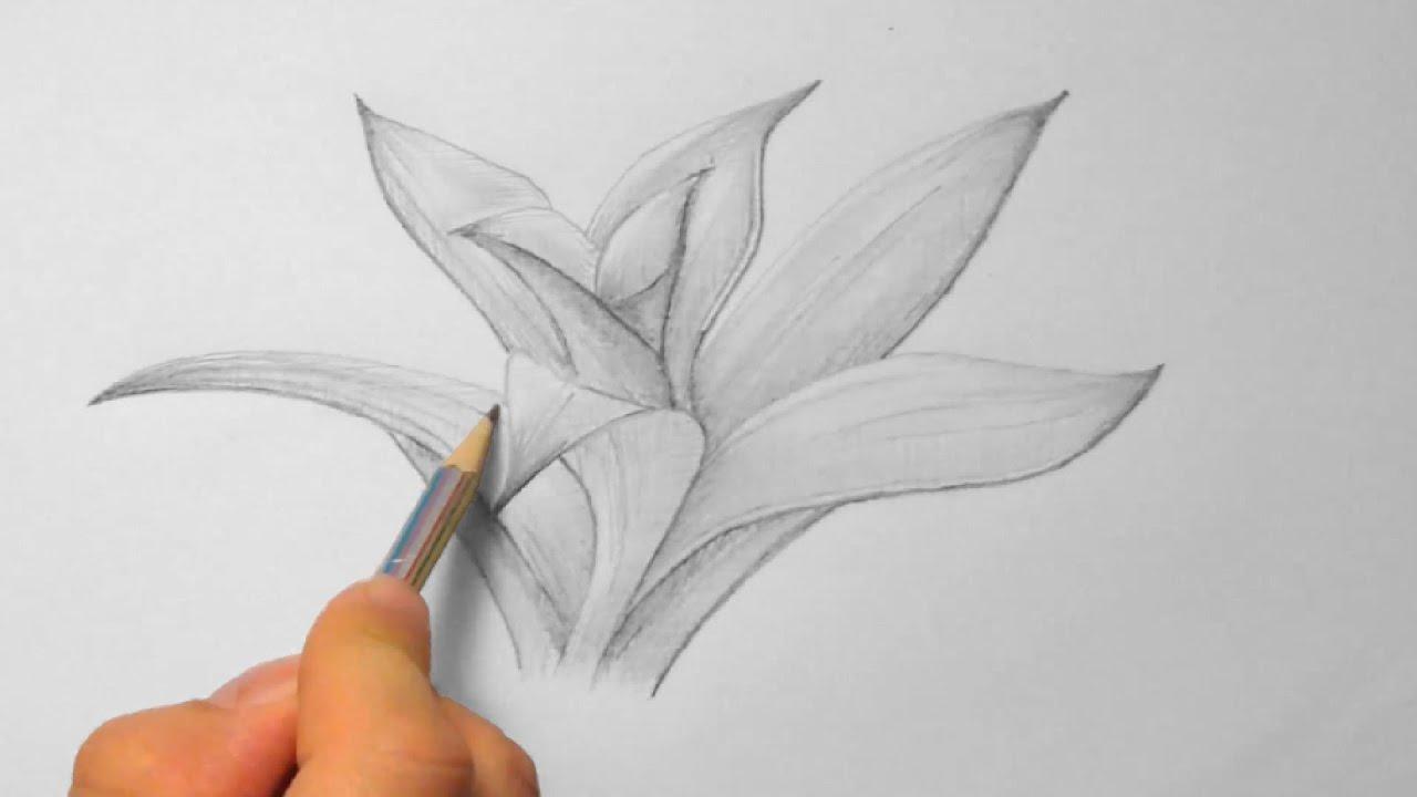 Bromelie zeichnen im Zeitraffer Bromeliad drawing in