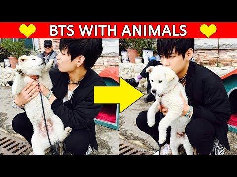😆 BTS with Animals Compilation   Bangtan Boys