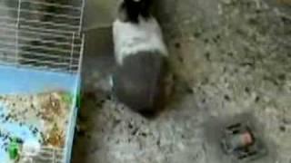 кролик с кошкой.flv