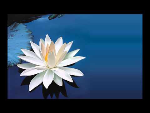 Groovy Lotus (Temptation Sensation Remix)