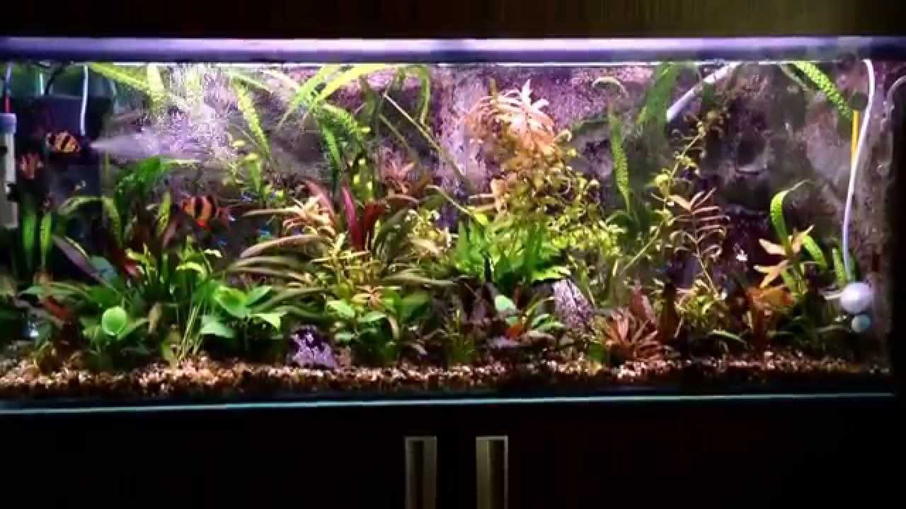 diy 250 l aquarium with 3d foam background 4 years after start youtube. Black Bedroom Furniture Sets. Home Design Ideas