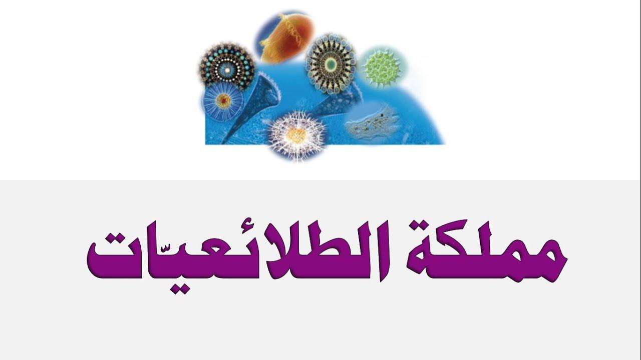 مملكة الطلائعيات العلوم والحياة الصف الثامن الأساسي المنهاج الفلسطيني Youtube