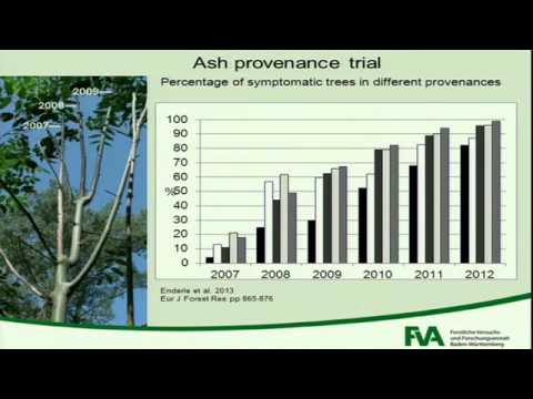 Session 2: Living with ash dieback in continental Europe (FRAXBACK London meeting)