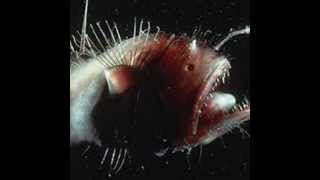 Top weird sea creatures Thumbnail