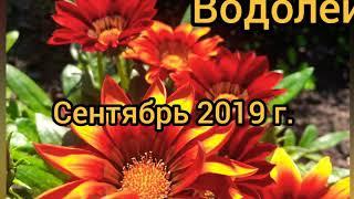 Водолей. Сентябрь 2019 г. Рекомендации от Таро