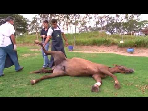 Anestésico EGG-PPU - J.A Saúde Animal