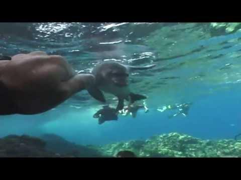 Best Hawaiian Monk Seal Encounter
