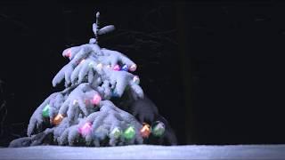 Футаж Новогодняя елка в лесу Зимний лес Гирлянды FOOTAGE