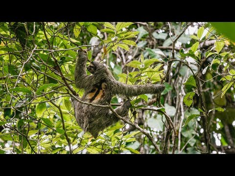 Jungle Time - Sloths, Monkey's & Frogs...OH MY! (Sailing Curiosity)