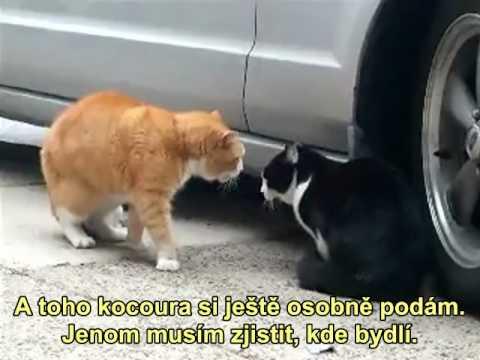 Bláznivé kočky. Funny Cats. from YouTube · Duration:  18 minutes 1 seconds