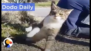 Cat Who Can't Keep His Balance Inspires Family: Best Animal Videos | The Dodo Daily