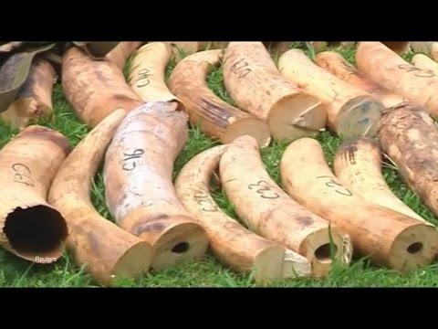 Burning $150 Million of Ivory for Conservation