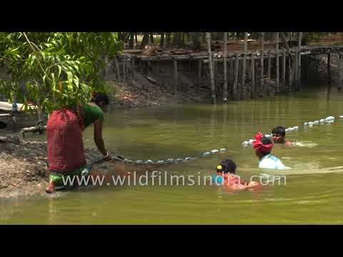 Fishing In The Largest Halophytic Mangrove Forest In The World