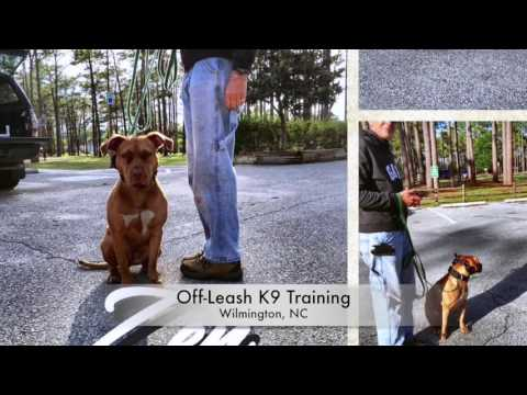 Pit Bull Awareness Month - Off Leash K9 Training, Wilmington, NC