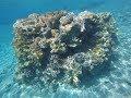Diving in Red Sea, coral reef in Eilat