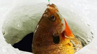 Ice Fishing Bluegill & Crappies