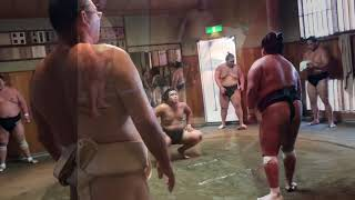 A morning SUMO Training Session in Tokyo