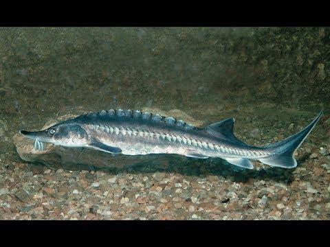 Севастопольский аквариум-музей: официальный сайт, цены