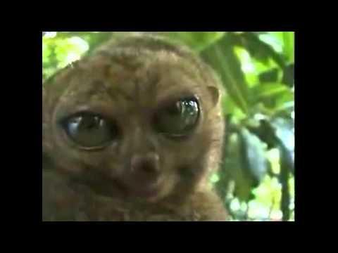 Вопрос: Сирихта. Где обитает, что известно об этом животном?