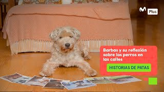 Historias de Patas - Reflexión sobre la vida de los perros en la calles