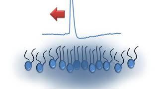 Soliton model in neuroscience | Wikipedia audio article