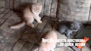 Коты-арестанты. В Томске котят арестовали за долги хозяев
