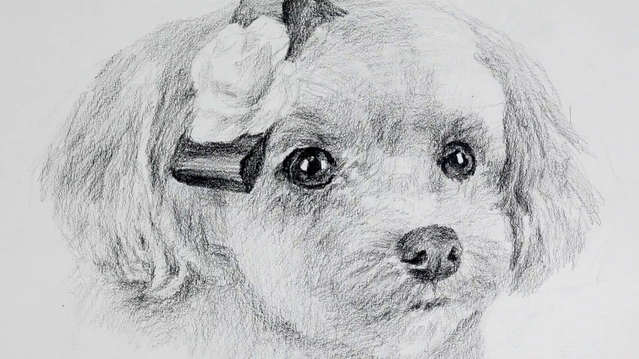 How To Draw A Cute Puppy With Only One Pencil Drawing Y Youtube