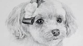 How to draw a cute puppy with only one pencil /drawing y