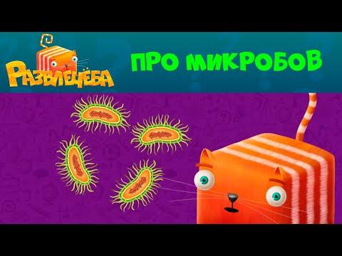 Развлечёба | Про микробов 😱😱😱 | СТС Kids