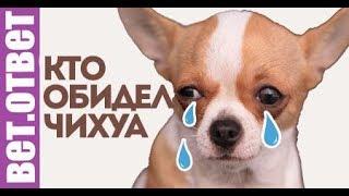 Почему собака плачет, кто обидел? Таблетки от клещей. ВетОтвет(, 2018-03-21T13:47:32.000Z)