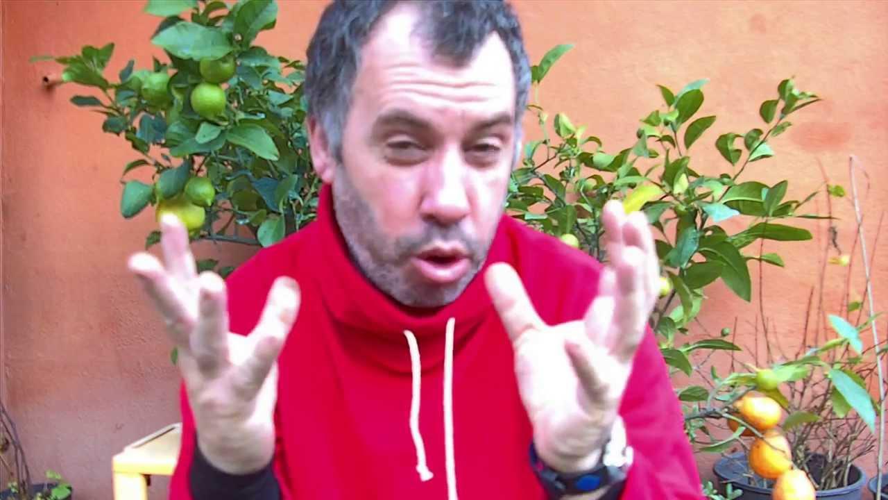 Cuidados de arboles citricos en maceta 2014 youtube - Bambu cuidados en maceta ...