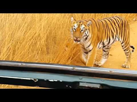 Safari in Tadoba - An experience full of wild life and tigers with Sachin
