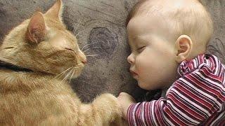 Смешные картинки про кошек и котят Выпуск № 17  FUNNY CATS СМЕШНЫЕ КОШКИ