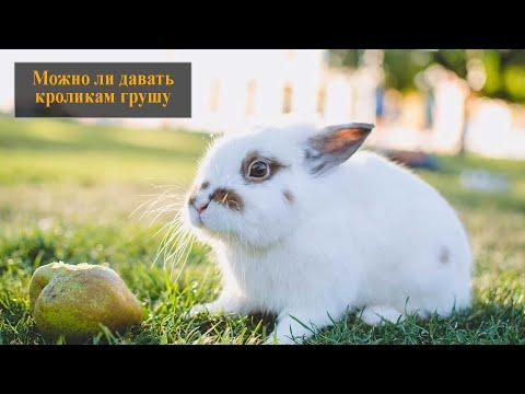 Можно ли кроликам грушу
