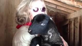03 24 2013 lamb movie