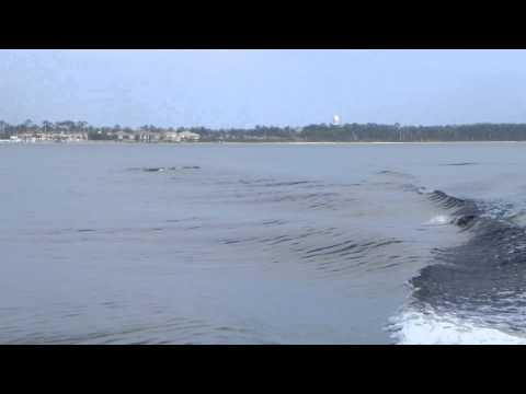 Pensacola Bay Dolphin Cruise Pt. 2