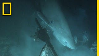 Shark Tagged From Submarine For First Time In History | National Geographic