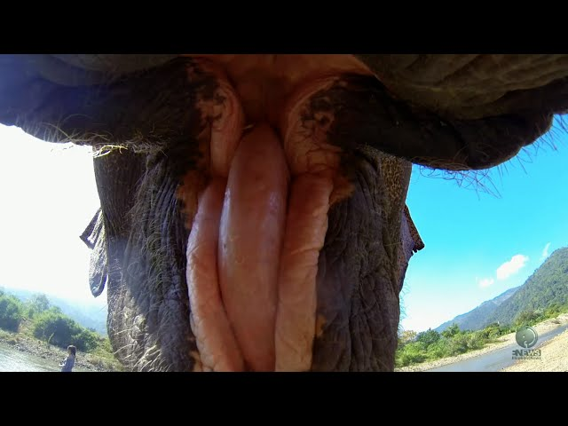 Close up elephant with my GOPRO