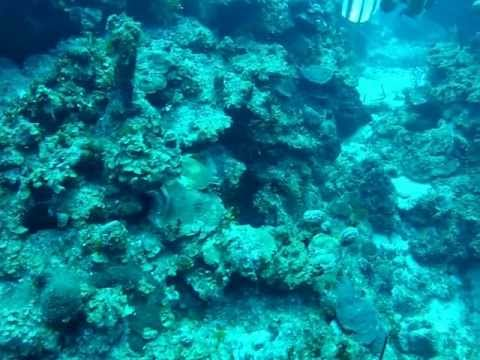 Grand Cayman Dive 100ft West Bay Round Rock