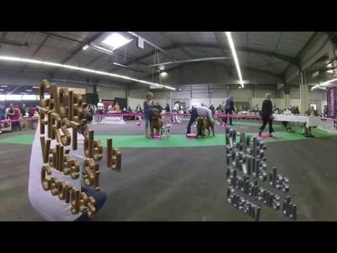 Championnat de FRANCE Dogue de Bordeaux 2014