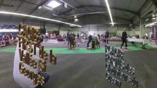 Championnat De France Dogue De Bordeaux 2014