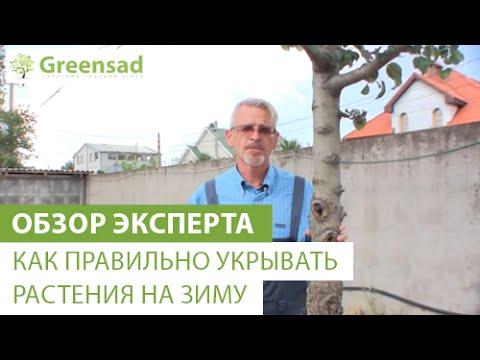 Вопрос: Какое выбрать укрытие на зиму для агавы, чтобы она не вымерзла в Крыму?