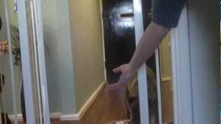 Whippet Cross Staffordshire Bull Terrier, My Little Postman !!!!!