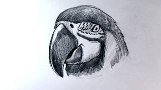 How to Draw a Parrot (Tattoo Style)