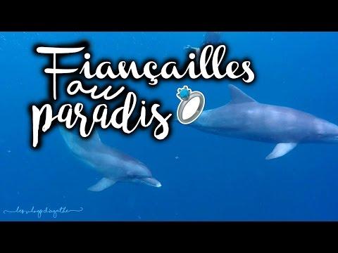 Journée de rêve avec les dauphins et fiançailles ◦ VLOG À MAURICE #11