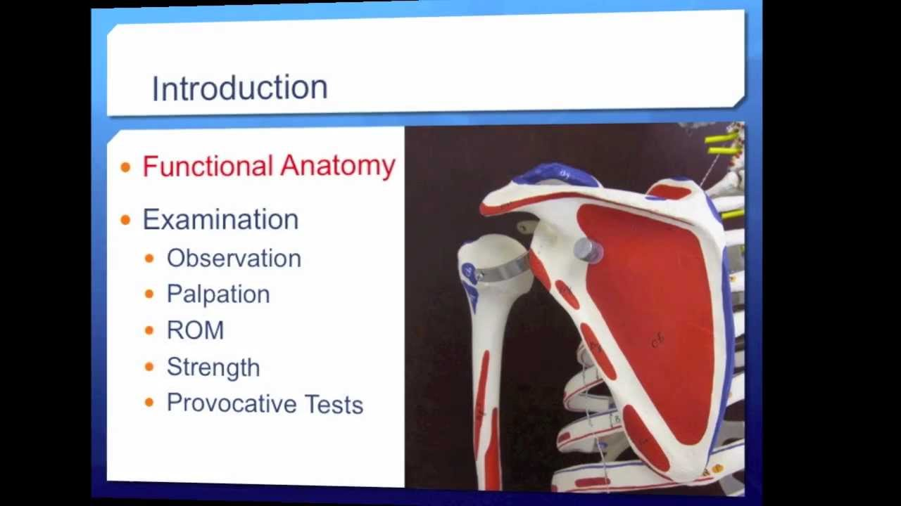 SdMskProject: Shoulder Exam Part 1--Functional Anatomy - YouTube