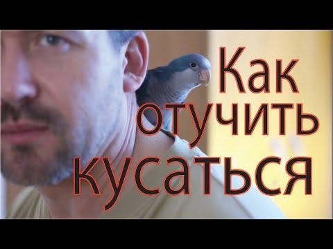 Серия 9. Как отучить попугая кусаться. Маша и Яша
